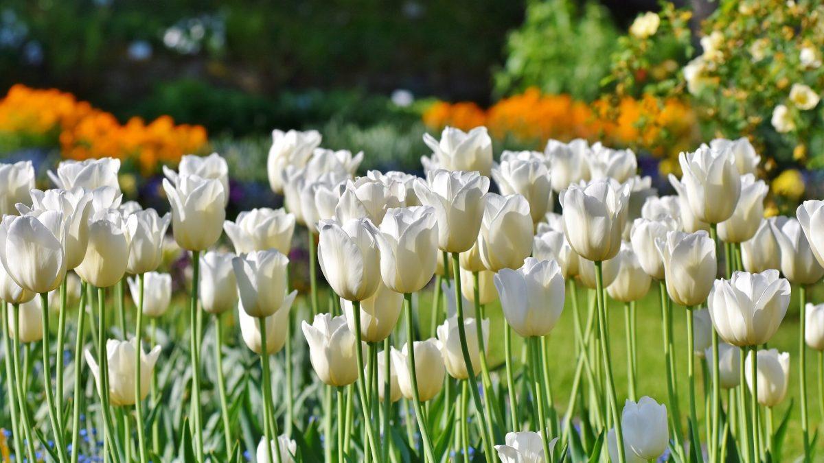 Green Living Gartengestaltung bietet für Gärten, Terrassen und Balkone Beratung, Planung und Gestaltung, daher jetzt rechtzeitig an den Garten denken, damit Frühlings-Genuss im Freien nichts im Wege steht!