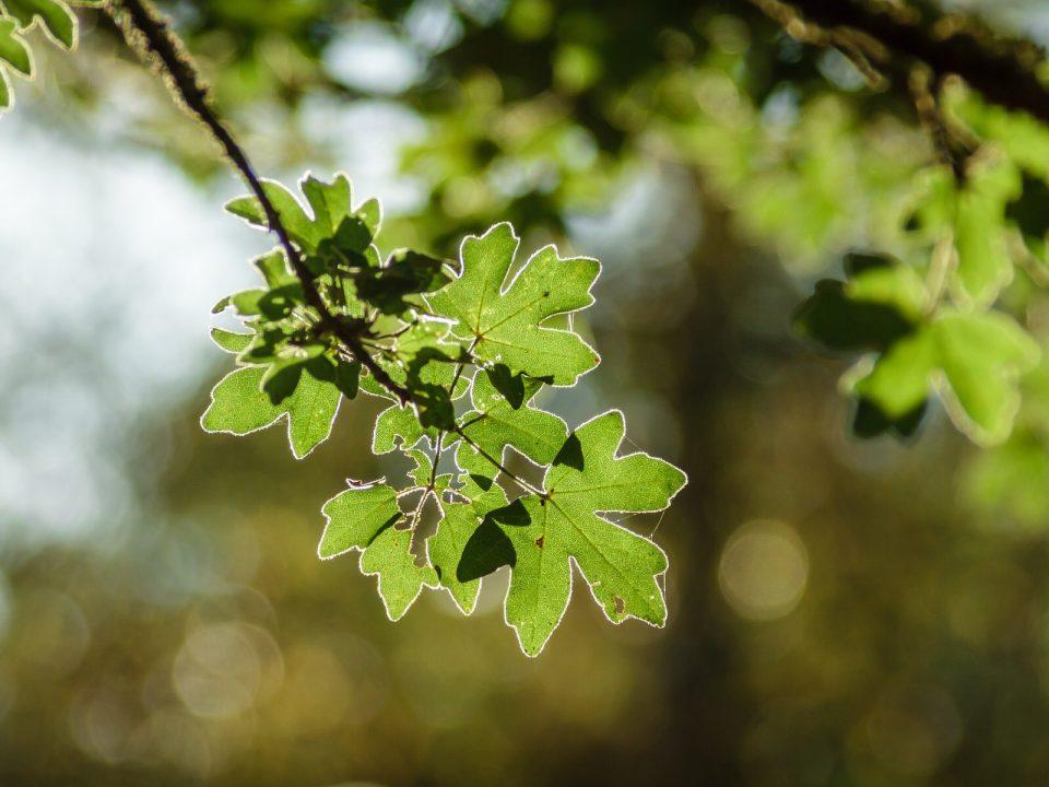 Christian Barwig von Green Living stellt in der Kronen Zeitung Pflanzen vor, die mit den veränderten Klima gut zurechtkommen.