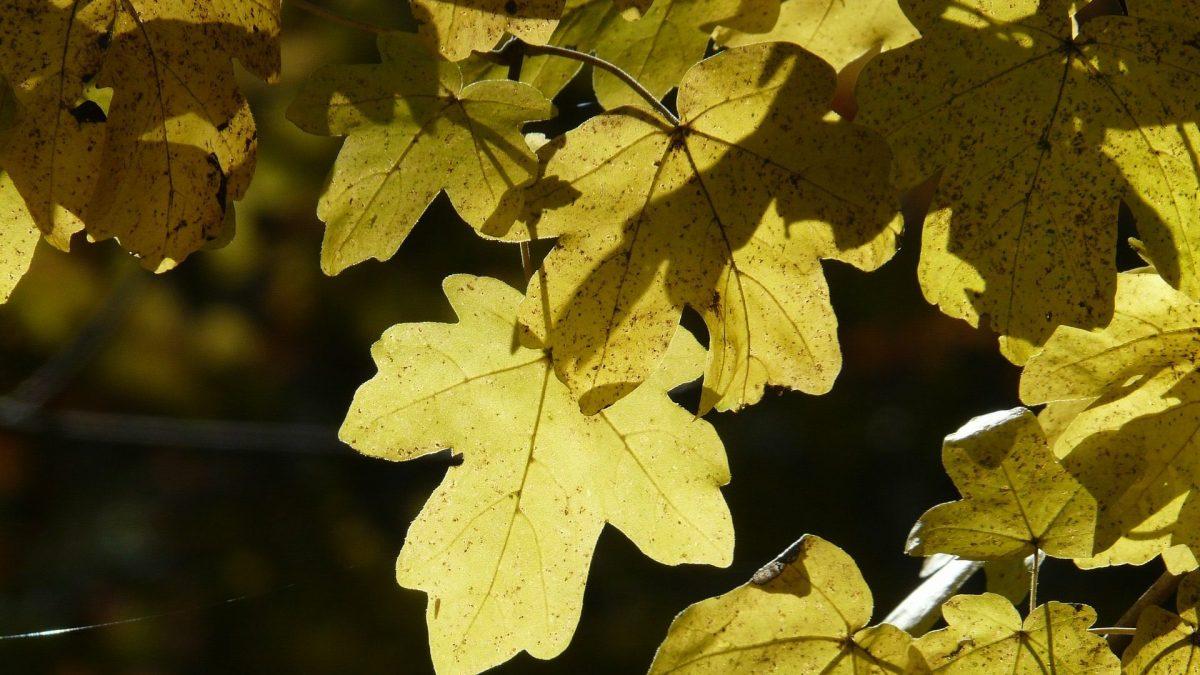 Green Living empfiehlt Pflanzungen im Herbst.